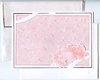 Rosen gelb Blumen Briefpapier TOP DIN A4 100 Blatt Motivpapier-5019